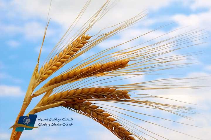 اعمال محدودیت صادرات مواد غذایی در برخی کشورها